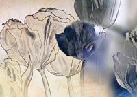 Obrazy kwiaty polne