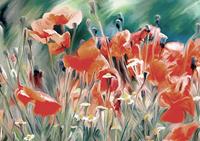 Fototapeta kwiaty polne