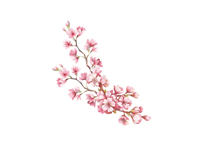 Z kraju kwitnącej wiśni