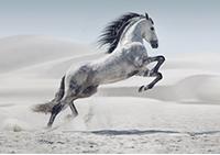 Fototapety z końmi