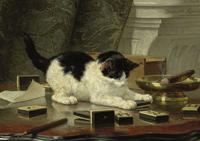 Obrazy koty