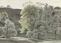 Obrazy las