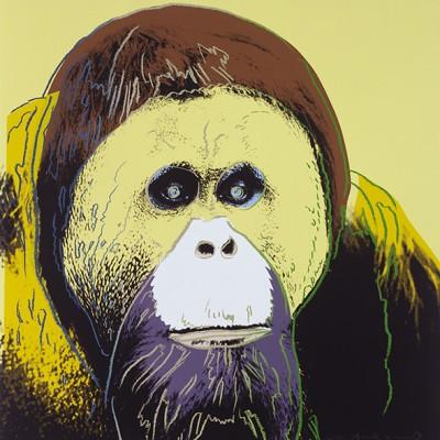 Orangutan - wf749