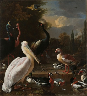 Ptaki - Reprodukcja - wf503