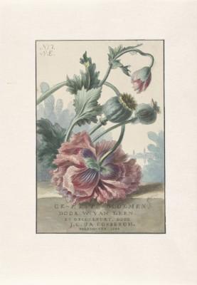 Kwiaty - wf125