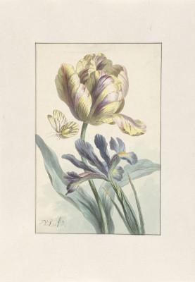 Kwiat - wf126