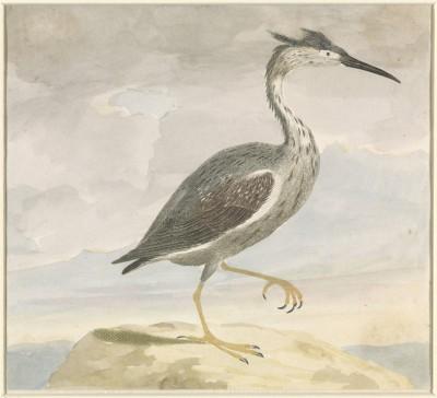 Ptak - wf130