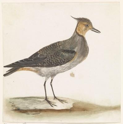 Ptak - wf131