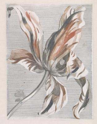 Kwiat - wf129