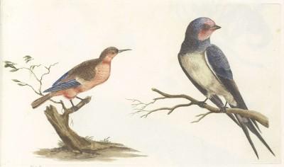 Ptaki, autor nieznany, 1688-1698r. - wf134