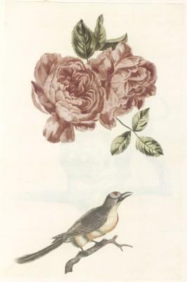 Ptak - wf135