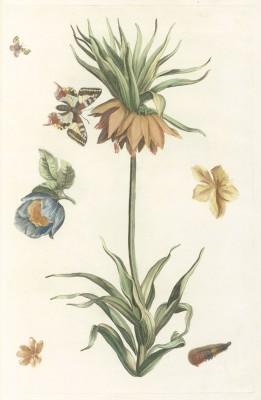 Kwiaty - wf139