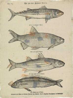 Ryby - wf141