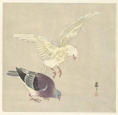 Ptaki - wf142