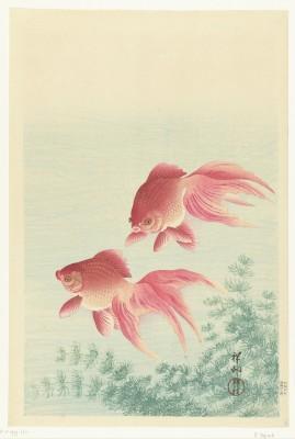 Ryby - wf144