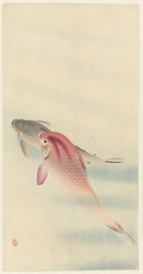 Ryby - wf145