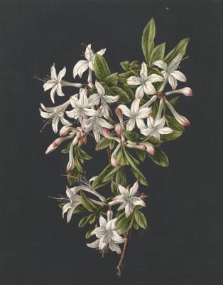 Kwiaty - wf150
