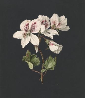 Kwiaty - wf151