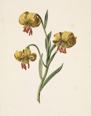 Kwiaty - wf152