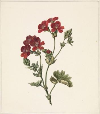 Kwiaty - wf153