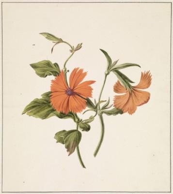 Kwiaty - wf154