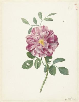 Kwiat - wf155