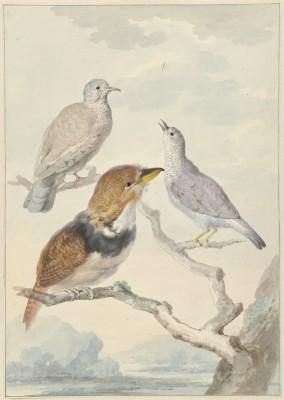 Ptaki - wf156