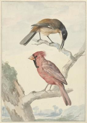 Ptaki - wf157