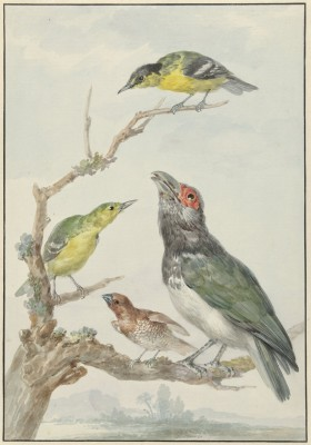 Ptaki - wf158