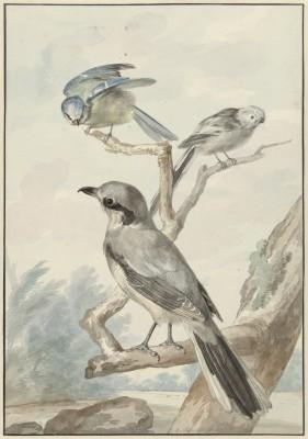 Ptaki - wf159