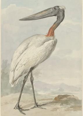 Ptak - wf108