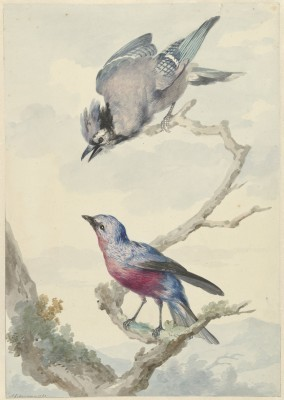 Ptaki - wf161