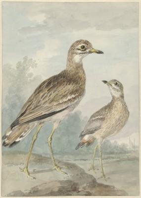 Ptaki - wf162