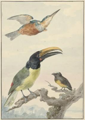 Ptaki - wf163