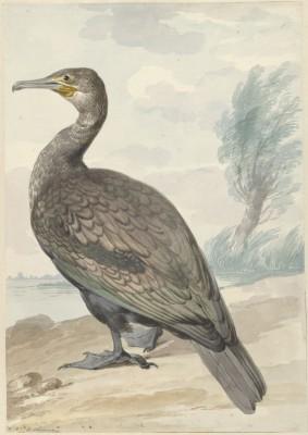 Ptak - wf164
