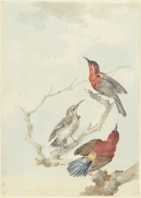 Ptaki - wf165