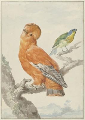 Ptaki - wf166