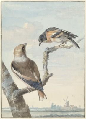 Ptaki - wf167