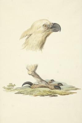 Ptak - wf169
