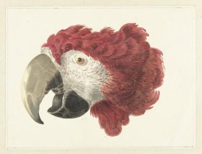 Papuga - wf170