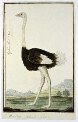Ptak - wf173