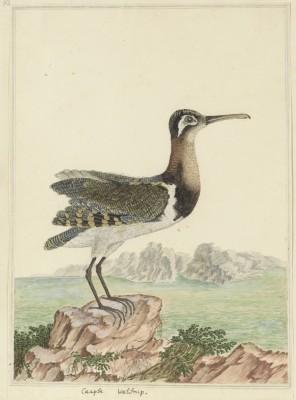 Ptak - wf175
