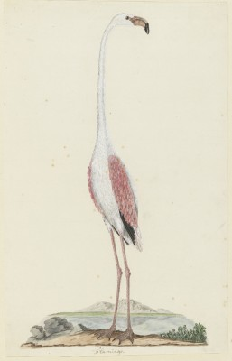 Ptak - wf176