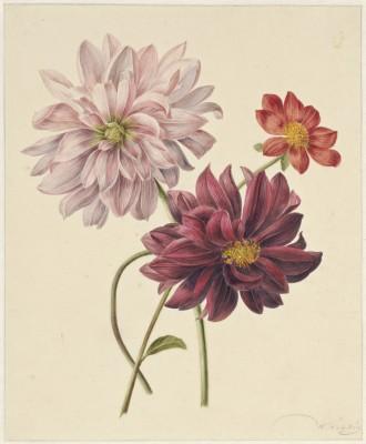 Kwiaty - wf178