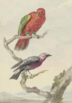 Ptaki - wf179