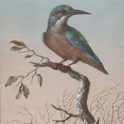 Ptak - wf181