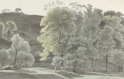 Drzewa - wf203