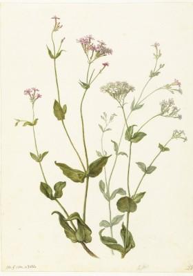Kwiaty - wf182