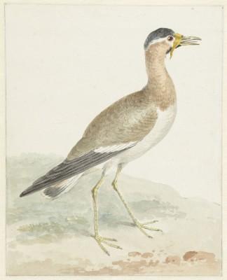 Ptak - wf190
