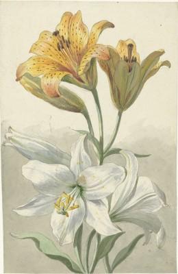 Kwiaty - wf193
